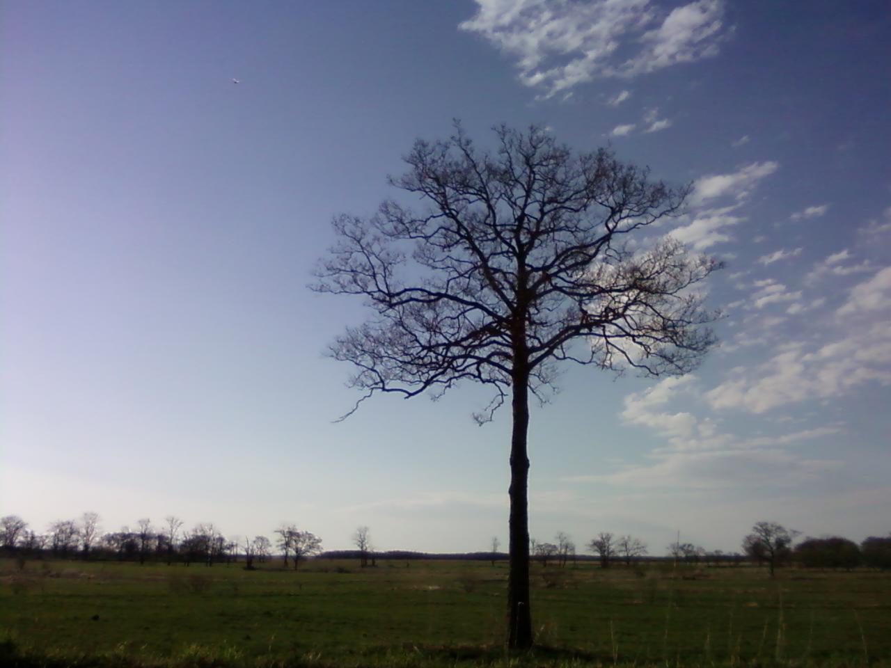 オレみたいな樹